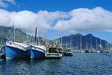 Hout Bay, fishing harbour, near Cape Town, South Africa