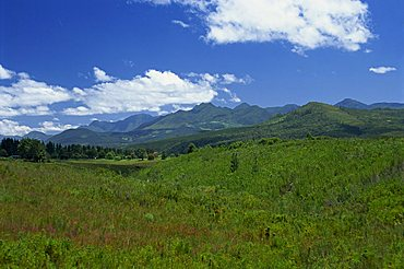 Fynbos (Cape Vegetation) and the Quteniqua Mountains, on the Garden Route, South Africa, Africa