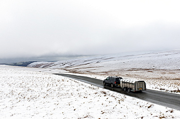 A four wheel drive vehicle and trailer with sheep negotiates a road through a wintry landscape in the Elan Valley area in Powys, Wales, United Kingdom, Europe
