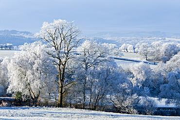 Frosty landscape, Powys, Wales, UK.