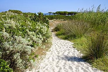 Sandy path to the beach, scrub plants and pine trees in the background, Costa degli Oleandri, near Ottiolu harbour, Sardinia, Italy, Mediterranean, Europe