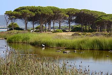 Lake with water plants and bird, sea and beach in the background, Costa degli Oleandri, near Ottiolu harbour, Sardinia, Italy, Mediterranean, Europe