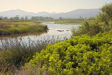 Typical Sardinian landscape, water pond and mountains in the background, Costa degli Oleandri, near Ottiolu harbour, Sardinia, Italy, Mediterranean, Europe