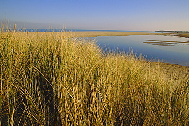 Shell Bay, Studland, Dorset, England, UK