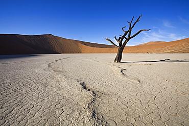Snaking line in the earth, Dead Vlei, Sossusvlei, Namib-Naukluft Park, Namib Desert, Namibia, Africa