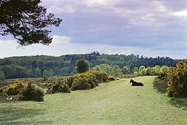 Bradley View, New Forest, Hampshire, England, United Kingdom, Europe