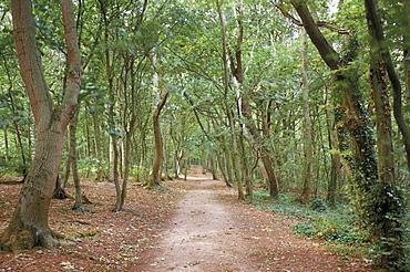 Path through the forest in summer, Avon, England, United Kingdom, Europe