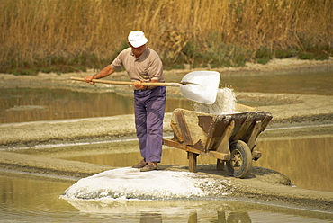 Man shovelling salt into a wheelbarrow in the salt pans near Guerande in Western Loire, France, Europe