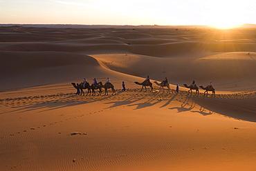 Dromedaries taking tourists on a sunset ride, Merzouga, Morocco, Sahara Desert, North Africa, Africa