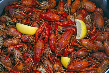 Boiled crawfish, Cajun food, Cajun country, Louisiana, United States of America, North America