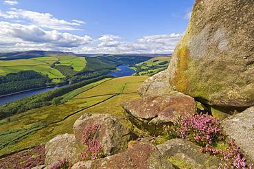 Heather moorland above Ladybower Reservoir, Whinstone Lee Tor, Derwent Edge, Peak District National Park, Derbyshire, England, United Kingdom, Europe