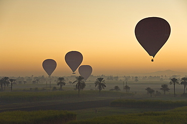 Lots of hot air balloons flying over the desert at sunrise west of the river Nile near Luxor, Egypt, North Africa, Africa
