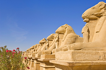 Row of Sphinx with ram heads at the great Temple at Karnak near Luxor, Thebes, UNESCO World Heritage Site, Egypt, North Africa, Africa