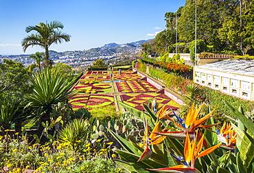 Formal garden with Bird of Paradise flowers, Madeira Botanical gardens (Jardim Botanico), Funchal, Madeira, Portugal, Atlantic, Europe