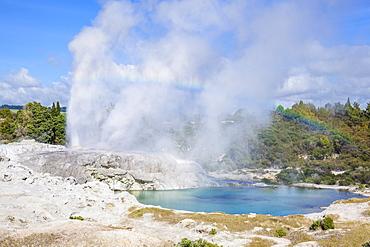 Pohutu geyser and Prince of Wales Feathers geyser, Te Puia, Whakarewarewa Thermal Valley, Rotorua, North Island, New Zealand, Pacific