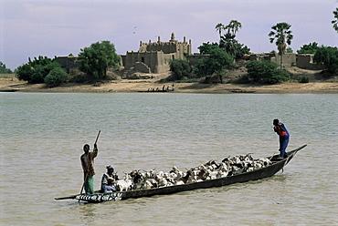 Peul herder and cattle crossing the River Bani during transhumance, Sofara, Mali, Africa