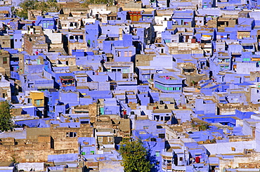The blue town of Jodhpur, Rajasthan, India, The blue houses are those belonging to the Brahmin caste