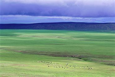 Ovorkhangai Province, Mongolia, Asia