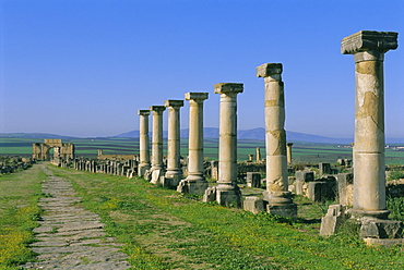 Roman archaeological site, Volubilis, Meknes Region, Morocco, North Africa, Africa