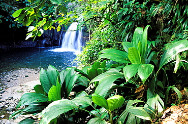 La Lezarde waterfall, National Park of Guadeloupe, Basse Terre, Guadeloupe, Caribbean, Central America