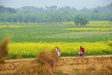 Fields near village on the bank of the Hooghly river, West Bengal, India, Asia