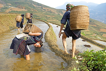 Young girl from Black Hmong ethnic group working on the rice fields, Sapa area, Vietnam, Indochina, Southeast Asia, Asia