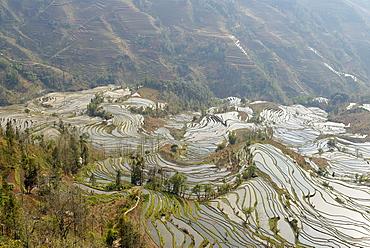 Terraced paddy-fields, Yuanyang, Yunnan, China, Asia
