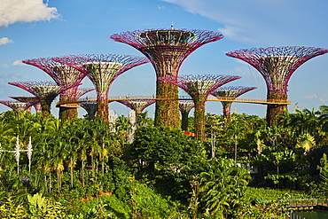 Supertree Grove, Garden By the Bay, botanic garden, Marina Bay, Singapore, Southeast Asia, Asia