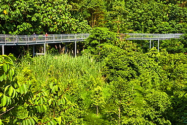 Walk on the Southern Ridges from West Coast Park to Faber Mount, Singapore, Southeast Asia, Asia