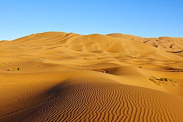 Badain Jaran Desert, Gobi Desert, Inner Mongolia, China, Asia - 712-2947