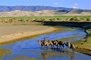 Camel caravan, Khongoryn Els dune, Gobi Desert National Park, Omnogov, Mongolia