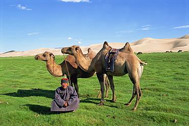 Man in traditional clothing with two camels from a camel caravan, Gobi National Park, Gobi Desert, Khongoryn Els dune, Omnogov, Mongolia, Central Asia, Asia