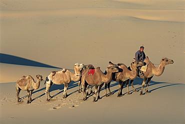 Camel caravan, Dunes de Khongoryn Els, Gobi National Park, Gobi desert, Omnogov, Mongolia, Central Asia, Asia