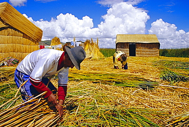 People changing the reeds which support the island, Uros People, Floating Islands, Lake Titicaca, Peru