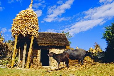 Nepalese countryside house, Nagarkot, Nepal