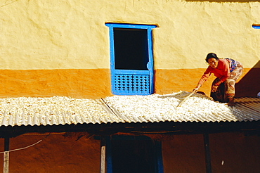 Peasant woman tidying up grains drying on her house terrace, Nagarkot, Nepal