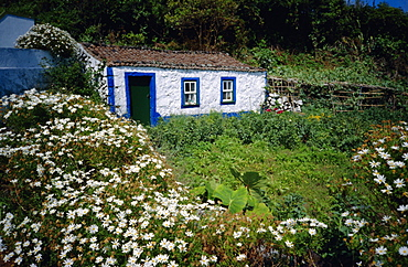 Single storey cottage and garden, Faja do Ouvidor, Sao Jorge Island, Azores, Portugal, Europe, Atlantic Ocean