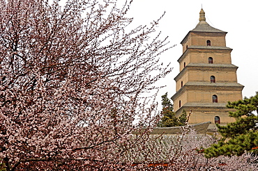 Great Wild Goose Pagoda (Dayanta) built during the Tang Dynasty in the 7th century, Xian, Shaanxi, China, Asia
