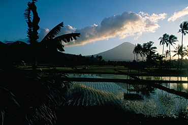 Reflections in water of rice paddies, Amed village, island of Bali, Indonesia, Southeast Asia, Asia
