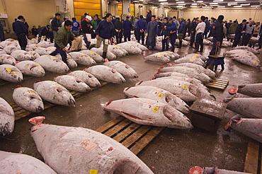 Tuna fish being auctioned, Tsukiji fish market, Tsukiji, Tokyo, Japan, Asia