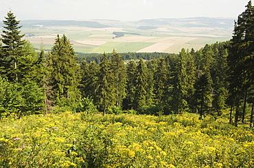 Hiking area, alpine meadow summer flowers, Slovensky Raj, Paradise National Park, Slovakia, Europe