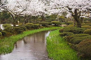 Cherry blossom in Kenrokuen Garden, Kanazawa, Honshu Island, Japan, Asia
