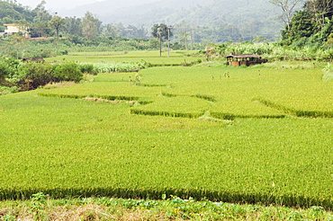 Rice terraces in Shuimann, Wuzhishan district, Hainan Province, China, Asia