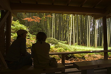 Couple looking out to bamboo forest from tea ceremony room, Kamakura city, Kanagawa prefecture, Honshu island, Japan, Asia