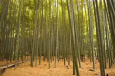 Stone lantern, bamboo forest, Kamakura city, Kanagawa prefecture, Honshu island, Japan, Asia