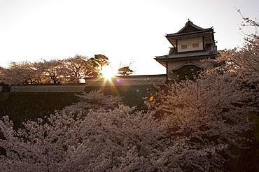 Sunset, cherry blossom, Kanazawa castle, Kanazawa city, Ishigawa prefecture, Honshu island, Japan, Asia