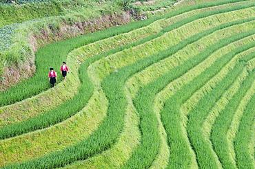 Yao women at the Dragons Backbone rice terraces, Longsheng, Guangxi Province, China, Asia
