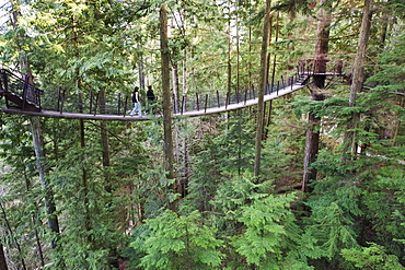Tourists on a treetop walkway in Capilano Suspension Bridge and Park, Vancouver, British Columbia, Canada, North America