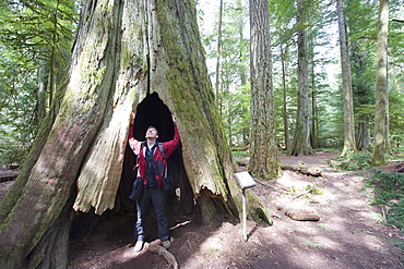 A hiker in a hollow tree trunk, Cathedral Grove, MacMillan Provincial Park, Vancouver Island, British Columbia, Canada, North America