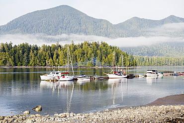 Boats moored at Tofino, Pacific Rim National Park Reserve, Vancouver Island, British Columbia, Canada, North America